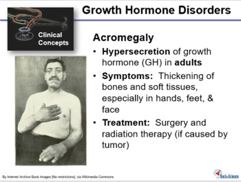 Endocrine System Powerpoint Presentation