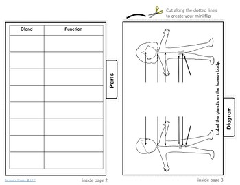 Endocrine System Printable and Digital Flipbook Review Activity