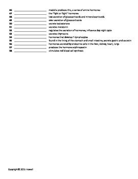 Endocrine System Quiz or Worksheet