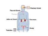 Endocrine System Short Unit