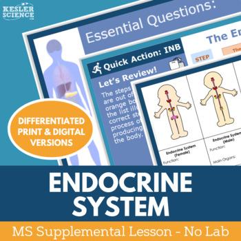 Endocrine System - Supplemental Lesson - No Lab