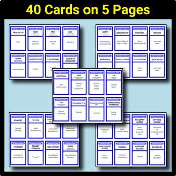 Endocrine System Taboo Game - 40 Cards {With Editable Template}