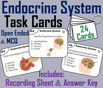 Endocrine System Task Cards (Human Body Systems Task Cards)