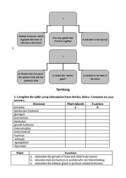 Endocrine System (Tasks in English)