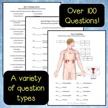 Endocrine System Test Questions
