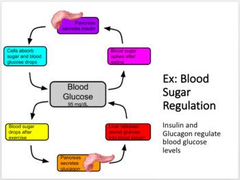 Endocrine System Unit Notes