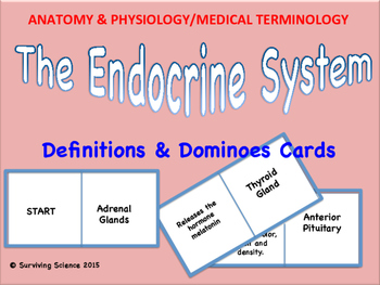 Endocrine System Vocabulary Domino Cards Game: Anatomy & M