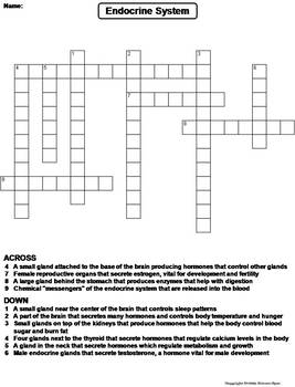 Endocrine System Worksheet/ Crossword Puzzle by Science ...