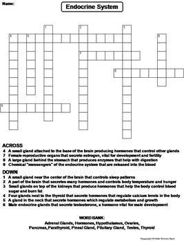 endocrine system worksheet crossword puzzle by science spot tpt. Black Bedroom Furniture Sets. Home Design Ideas