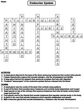 Endocrine System Worksheet/ Crossword Puzzle