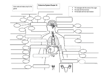 Hormone Concept Map.Endocrine System Labeling And Concept Map By Bates Science Tpt