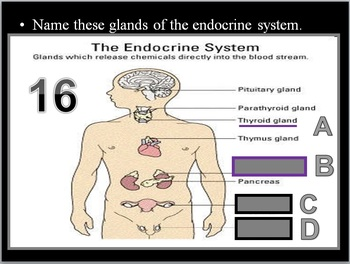 Endocrine and Reproductive System Quiz Game