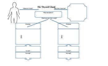 Endocrine gland and hormone graphic organizer