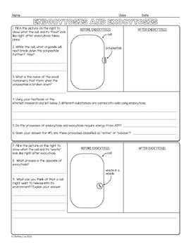 Endocytosis and Exocytosis Biology Homework Worksheet