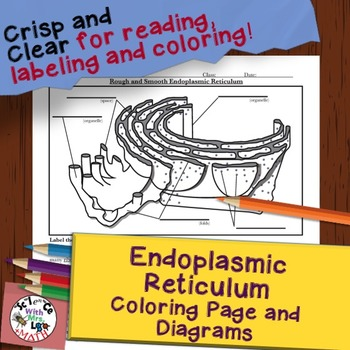 Endoplasmic Reticulum Organelle Diagram Coloring Page and Reading Page
