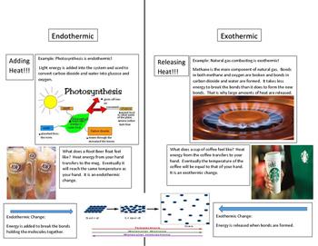 Endothermic VS. Exothermic Study Sheet