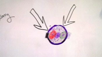 Endoysymbiosis: Magnetic Demo for Dry Erase Board