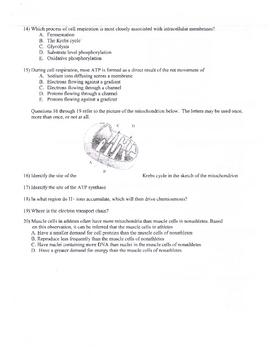 Energetics Test HS Biology