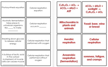 Energy Conversion - Photosynthesis and Cellular Respiration Flashcards (4B)