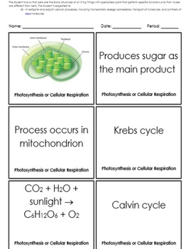 Energy Conversion - Photosynthesis and Cellular Respiration Review Activity (4B)