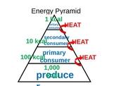 Energy Flow (3-2) PowerPoint