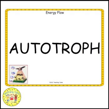 Energy Flow Vocabulary Cards