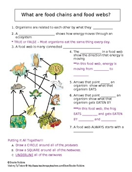 Energy Flow Food Web Guided Notes