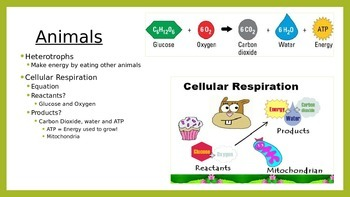 Energy Flow: Photosynthesis and Cellular Respiration PPT