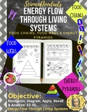 Energy Flow Through Living Systems - Food Chains, Food Web
