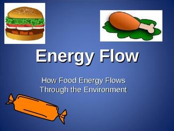 Energy Flow Through an Ecosystem