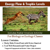 Energy Flow and Trophic Levels Lesson and Activity
