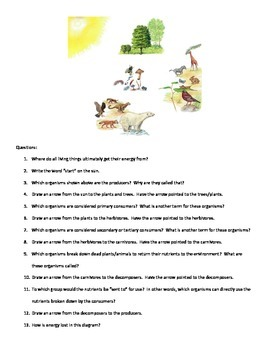 Energy Flow in Ecosystem Notes and Diagram Questions - With Key