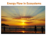 Energy Flow in Ecosystems (Middle - High School)
