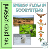 Energy Flow in Ecosystems - Distance Learning No Prep Lesson