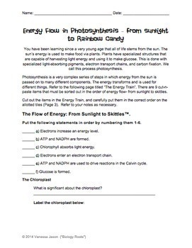 Photosynthesis Energy Flow- From Sunlight to Sugar