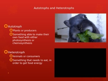 Energy Flow in Photosynthesis and Cellular Respiration