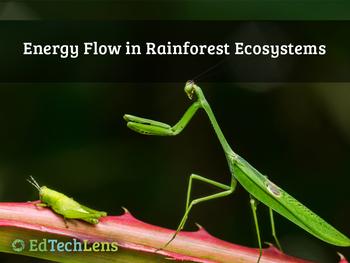 Energy Flow in Rainforest Ecosystems PDF