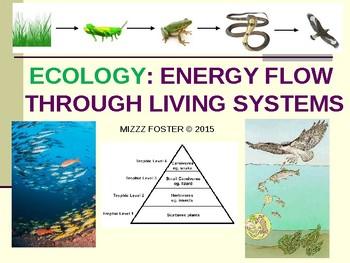 Trophic Levels Food Web