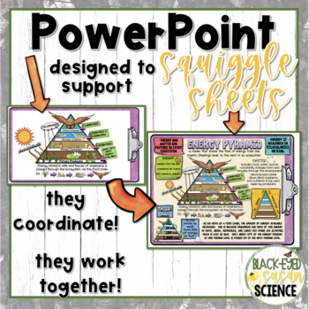 Energy Pyramid Doodle Notes-POWER POINT