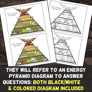 Energy Pyramid Color by Number - Science Color By Number