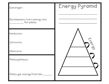 Food Chain And Energy Pyramid Brochure Foldable By