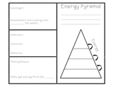 Food Chain and Energy Pyramid Brochure Foldable