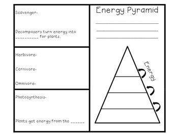 Food Chain and Energy Pyramid Brochure Foldable