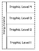 Energy Pyramid Foldable