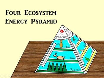 Energy Pyramid Foldable (Four Food Chains)