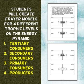 Energy Pyramid Foldable - Frayer Model Format - Great for INBs!