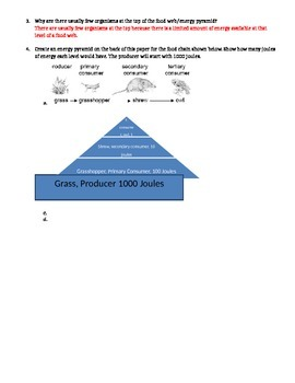 Energy Pyramid Homework