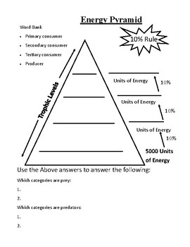 Energy Pyramid Practice Worksheet by Albino Squirrel | TpT