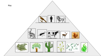 Energy Pyramid Sort!