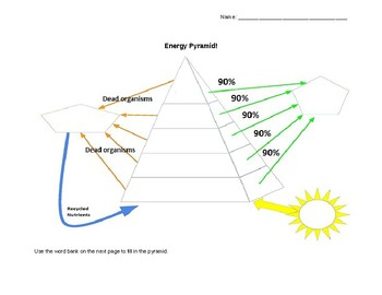 Energy Pyramid Template and Sequencing Vocabulary